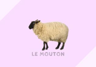 フランスの羊肉と仔羊の種類と分類[mouton, agneau]