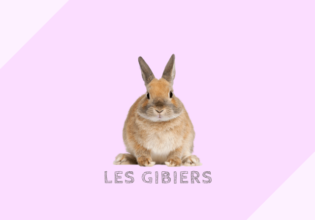 フランスのジビエの種類[gibiers]