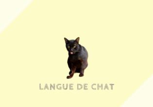 ラングドシャ Langue de chat