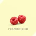フランボワジエ Framboisier